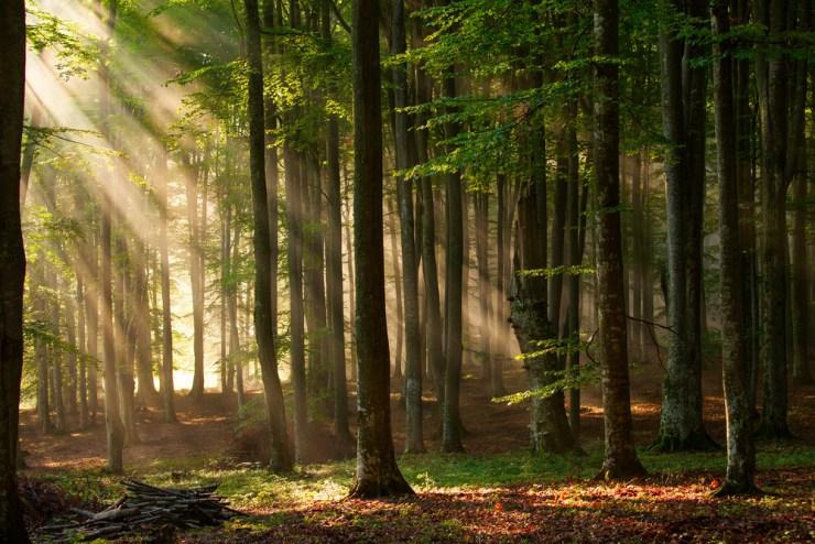 Ein Wald bietet sich an für eine Notfallgrube